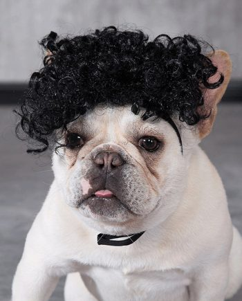 Wig Anjing Kucing