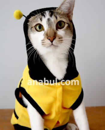 kostum kucing lebah