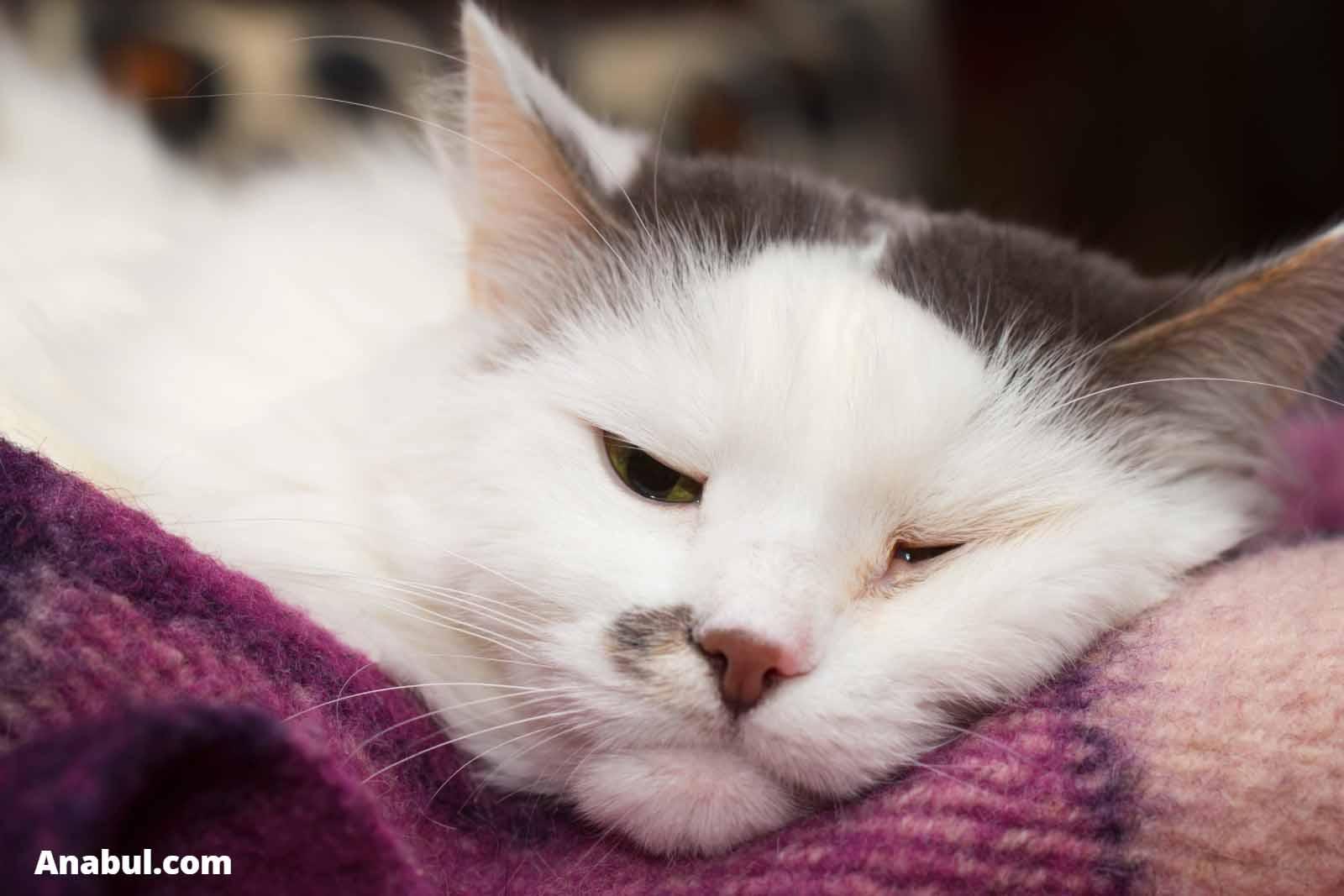 ciri kucing sakit